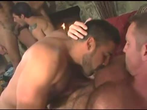 Orgy graubären